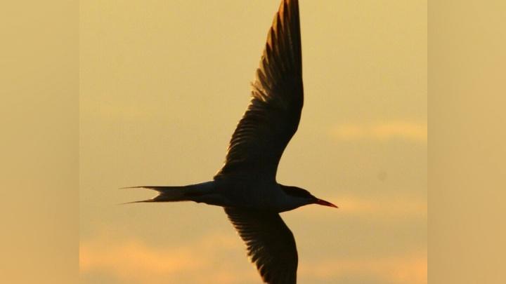 Волжанин сделал красивейшие фото парящих на закате над Ахтубой птиц