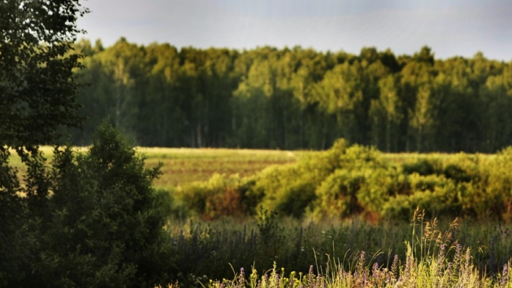 Итоги года экологии в Зауралье подсчитали в деревьях и свалках