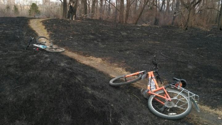 От салюта в Красноярске загорелся остров Татышев: тушили со спасателями