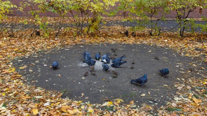Волгоградская область проводит октябрь резким похолоданием и дождями: прогноз на неделю