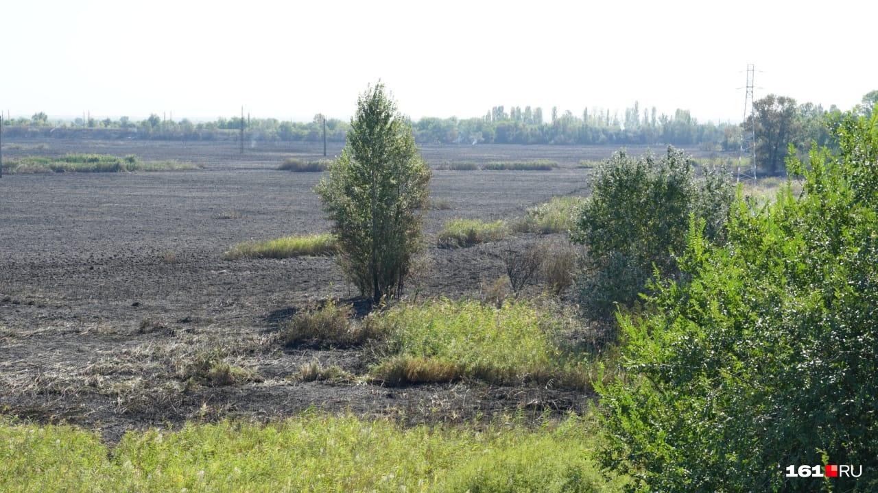 Пожар уничтожил растительность на пяти гектарах