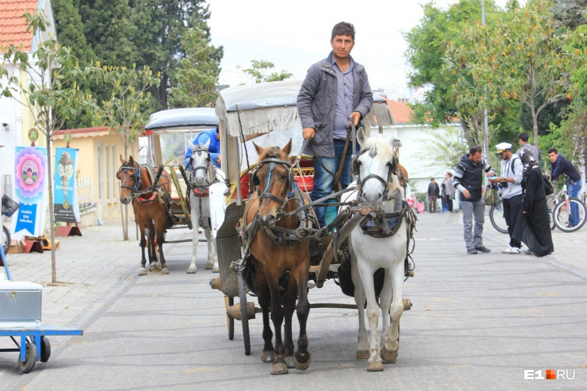 Одно из развлечений для туристов в Турции — поездки в повозке, запряженной лошадьми