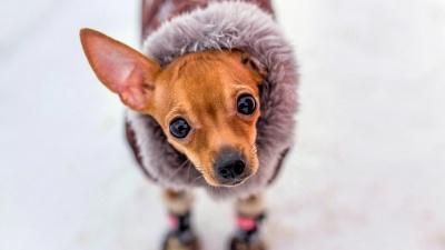 Зима «отморозилась». Разбираемся со специалистами в причинах аномально тёплой погоды