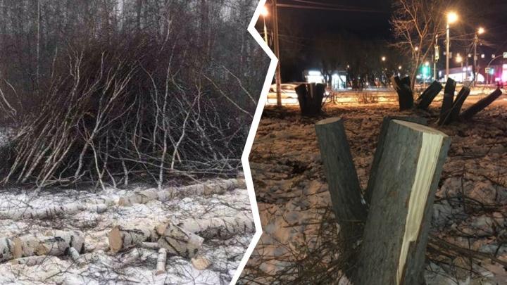 Ущерб от массовой вырубки деревьев на Северо-Западе Челябинска оценили в полмиллиона рублей