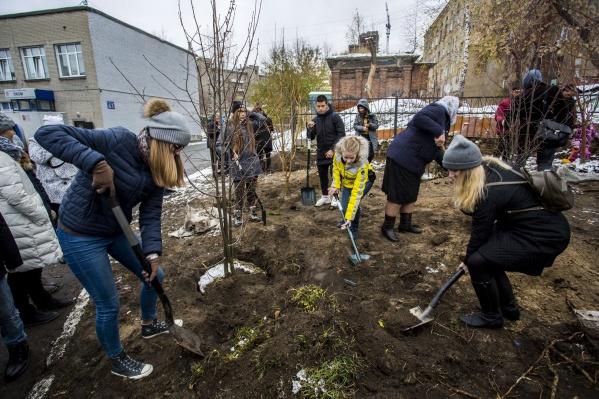 Жители ближайших домов и ученики лицея высадили новые деревья неподалёку от ранее вырубленных