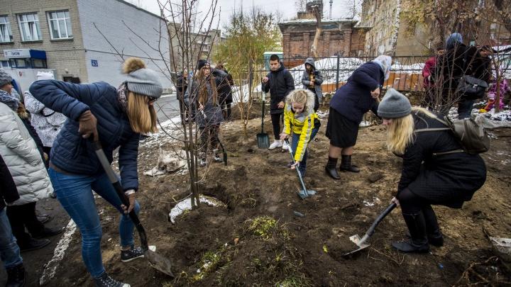 Снова зелено: новосибирцы скинулись и посадили новые деревья у лицея на Советской