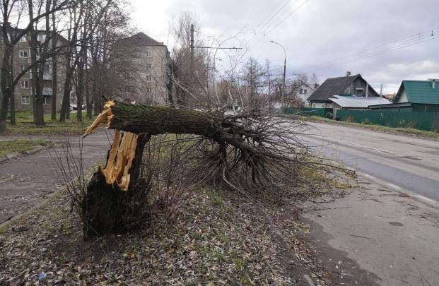 Предупреждение от МЧС: на Ярославль обрушится лютый ветер