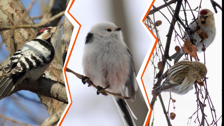 А кто у нас тут летает? Зоолог — о птицах в городе и о том, как им помочь пережить зиму