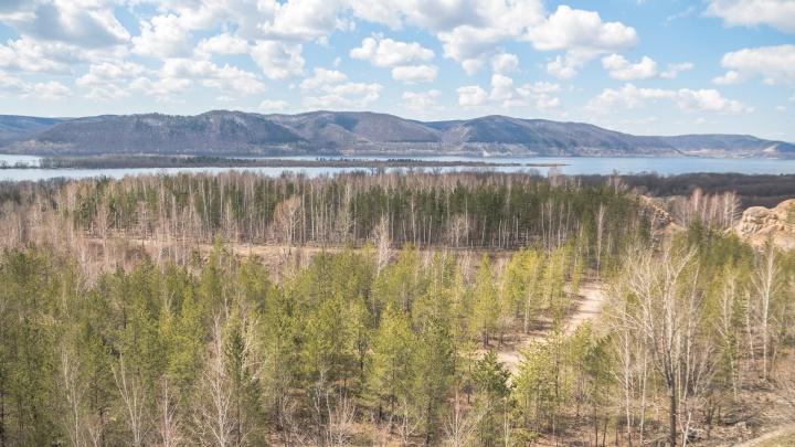 Жителям Самарской области запретили ходить в лес