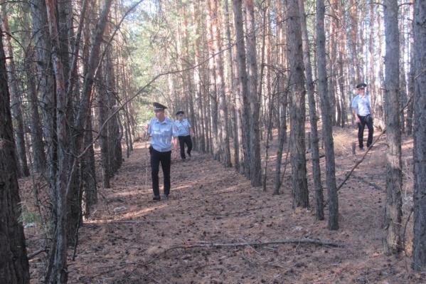 Лес прочесывали цепью