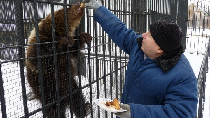 В Омской области незаснувшую медведицу Соню накормили блинами на Масленицу