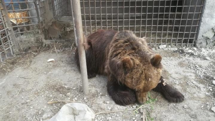 Омича, который остался без руки из-за медведицы, выписали из больницы