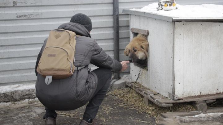 Омский приют для собак ищет сотрудников-мужчин на зарплату до 20 тысяч рублей