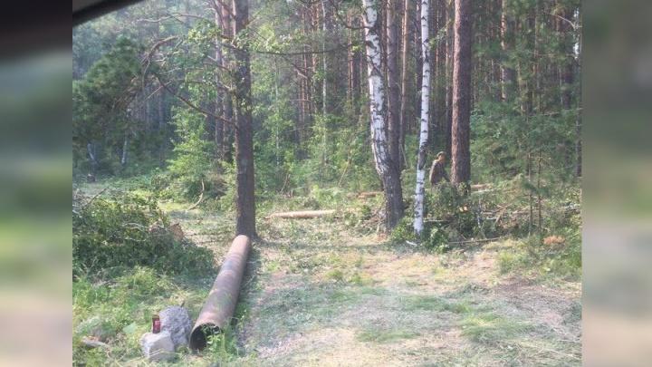 Красноярский депутат заподозрил чиновников в вырубке деревьев ради стройки домов на Мане