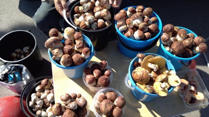 В Курганской области за сезон грибами отравился только один человек