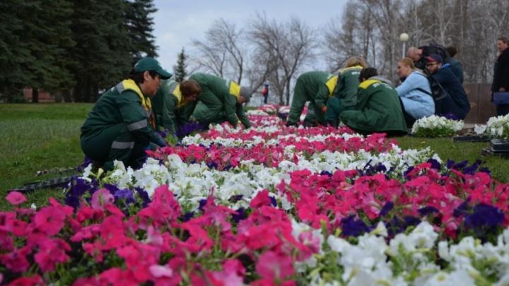 60 тысяч петуний и бархатцев: в Уфе ко Дню Победы высадили цветы