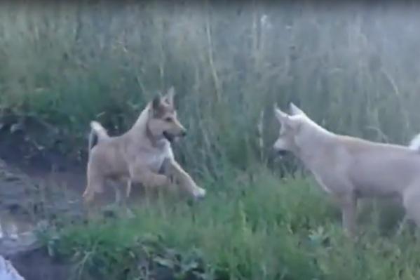 Кадр из видео годичной давности: расстреляли именно этих собак, а с ними — еще двух