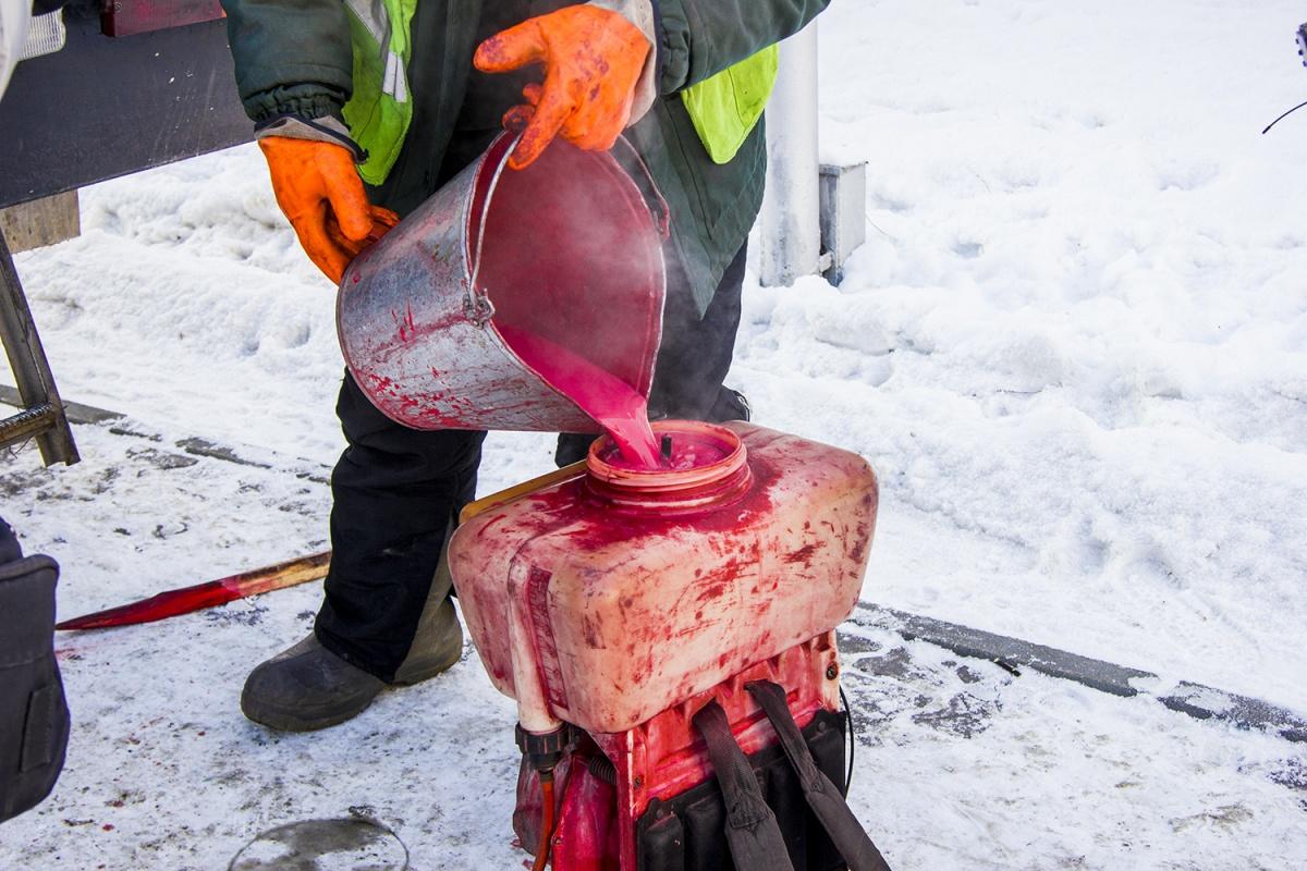 ВНовосибирске ёлки покрасили врозовый цвет для защиты отвандалов