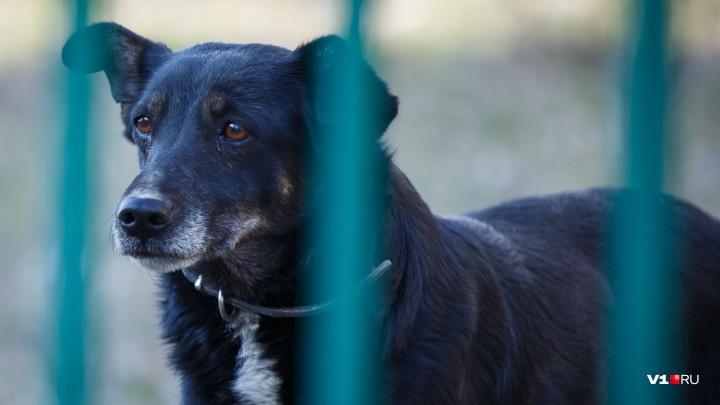 Волгоградский живодёр забил молотком и зарезал свою собаку