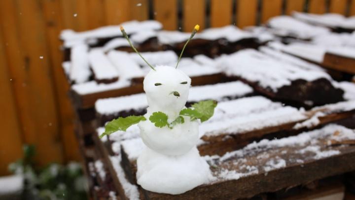 «Дыхание Арктики усилится»: Ярославскую область завалило снегом. Фото и прогноз погоды