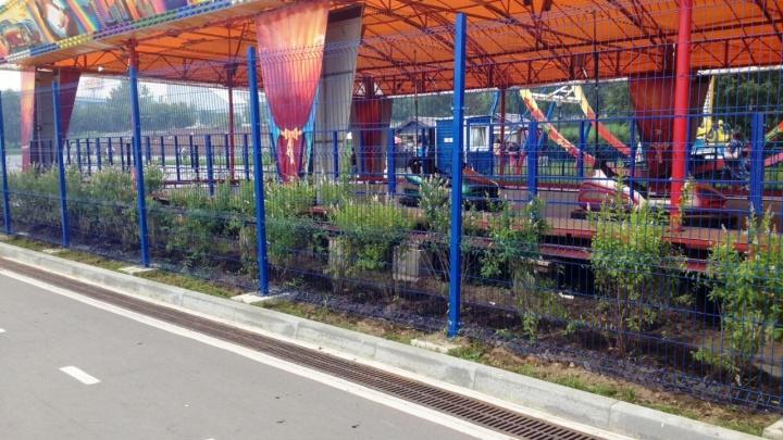На Михайловской набережной появилась изгородь из кустов