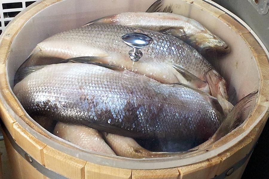 Самая нужная вмире пресноводная рыба была найдена вКрасноярском крае