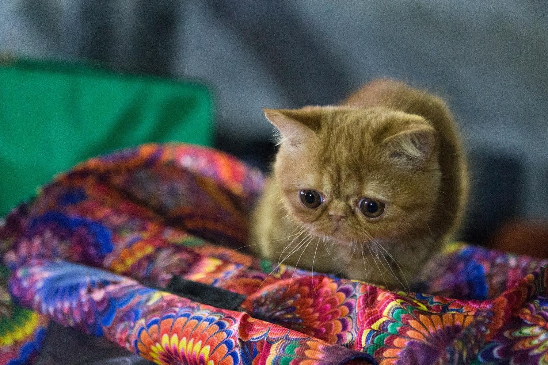 Глядя на некоторых котят, невозможно не умилиться