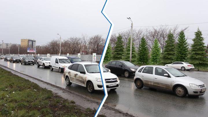 Зацени ёлочку: урбанист предложил вместо заборов на «Меридиане» деревья. Что не так с этой идеей