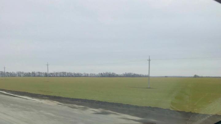 «В полях зеленеет травка»: Волгоград готовится в серости встречать Новый год