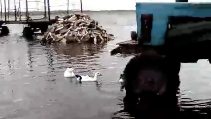 В деревне, где утки плавали по улицам, ввели режим ЧС