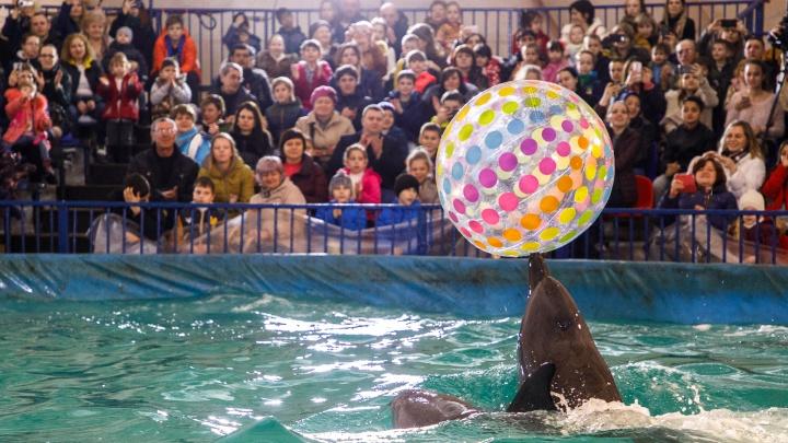 «Волгограду дельфинарий нужен!»: геронтолог о крикунах, зоозащитниках и позиции кладбища