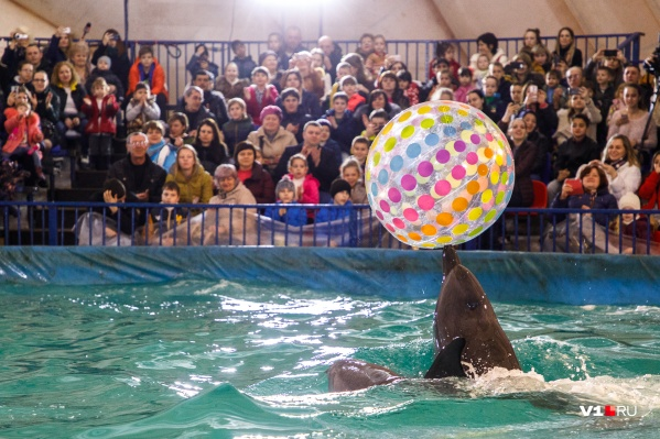 Детям Волгограда и науке дельфинарий нужен