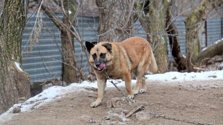 В Нефтекамске после укуса собаки установили карантин по бешенству