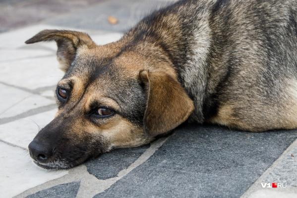 Пёс сейчас в клинике отходит от пережитых испытаний