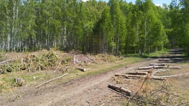 Ущерб более 5,5 миллиона: в роще на северо-западе Челябинска вырубили 300 деревьев