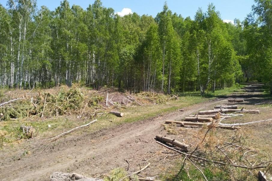 Неизвестные срубили 324 дерева