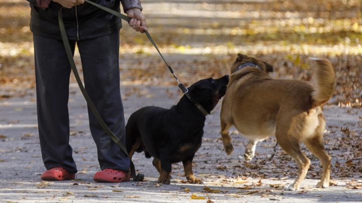 «Я стала уже третьей пострадавшей»: волгоградка осталась без пальца после встречи с агрессивным псом