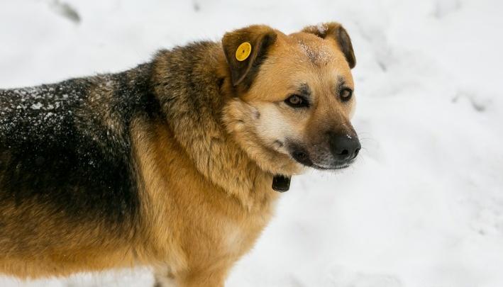 Назван микрорайон с самым большим числом бездомных собак