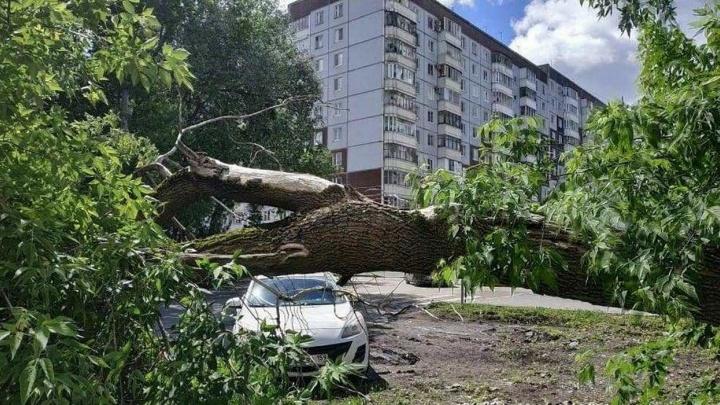 В Перми штормовой ветер повалил деревья, заборы и строительные леса. Фото