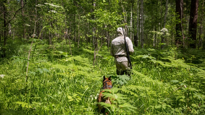 Охотникам разрешили подстрелить каждого четвёртого соболя в окрестностях Новосибирска