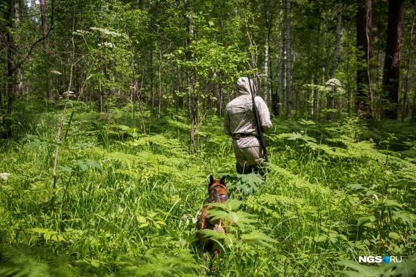 За год новосибирским охотникам можно добыть трёх рысей и несколько сотен соболей