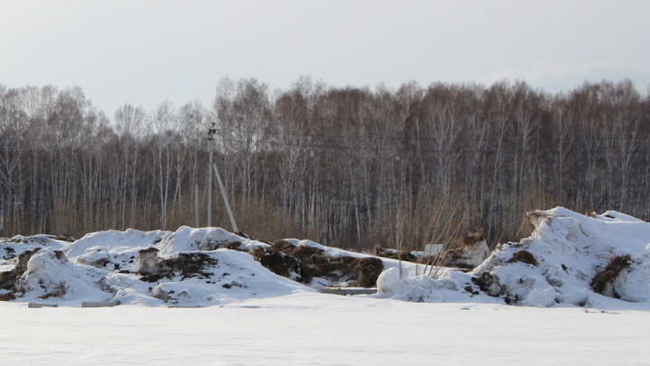 В лесу около Гусинобродского шоссе нашли свалку из снега и мусора