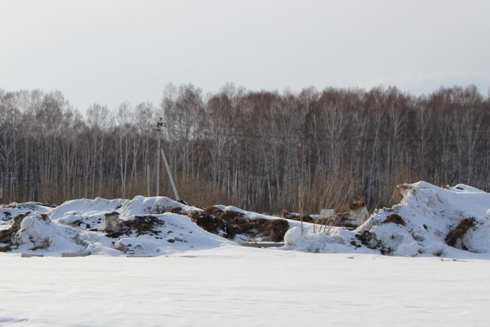 В«Горзеленхозе» оценили ущерб в 1,5 млн рублей