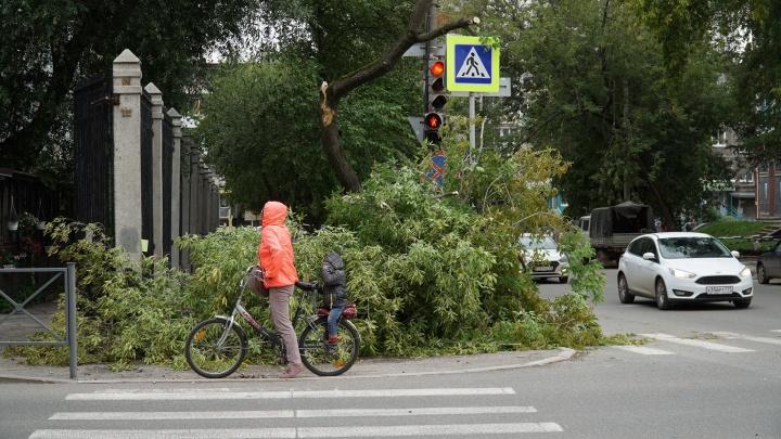 Повалены деревья, есть пострадавшие: как Пермский край пережил ураган. Хроника разрушений