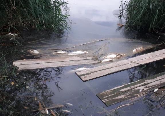 «Сдохла рыба, улетели птицы»: пруд в Дзержинском районе отравлен неизвестным веществом