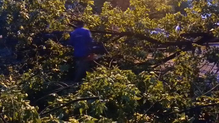 В Уфе дерево рухнуло на припаркованную машину