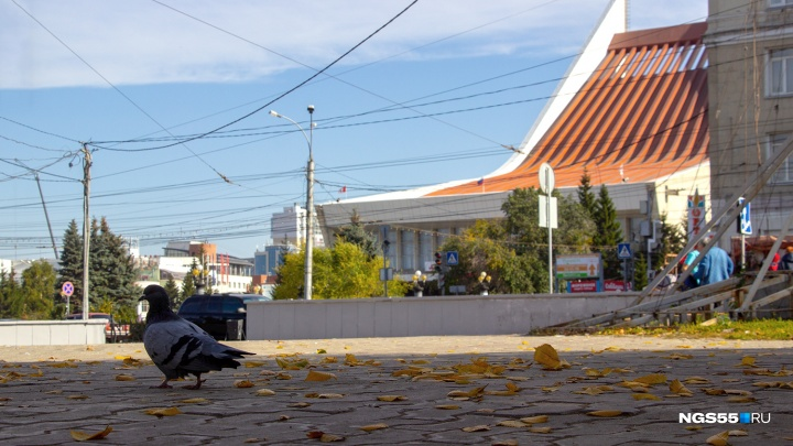 С началом новой рабочей недели в Омске потеплеет
