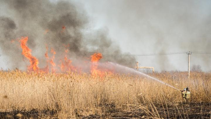За пять лет в Ростовской области произошло 15,5 тысячи ландшафтных пожаров