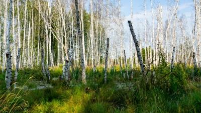 10 советов от волонтеров, как не потерять ребенка в лесу