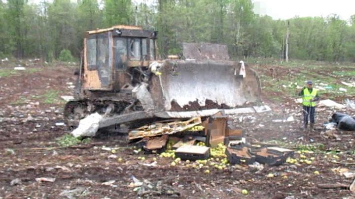 Пермские таможенники уничтожили 352 килограмма санкционных яблок
